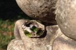 Anello in argento con olivina e tormaline