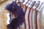 Applicazione swarovski per maglie