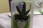 Bomboniera con vasetto in vetro e pianta grassa