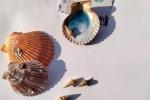 Calamita conchiglia con effetto onda decorata in resina