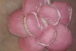 Fiori-cuscini