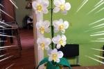 Orchidea realizzata all'uncinetto