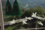 Orecchini con nappe verdi e decorazioni con perline