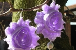 Orecchini fiori di chiffon viola con perle
