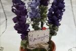 Vaso in coccio con fiori di lavanda in pannolenci